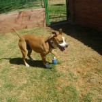 Austinview Dog Kennels Midrand